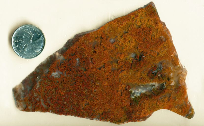 Orange, yellow and red moss-patterns in a slab of Oregon Moss Agate.