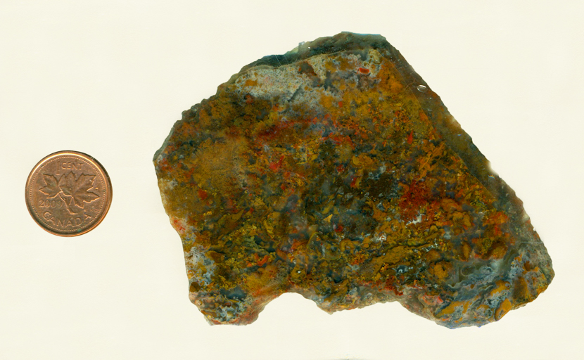 Yellow, red and brown moss growing densely in a slab of chalcedony from New Mexico.