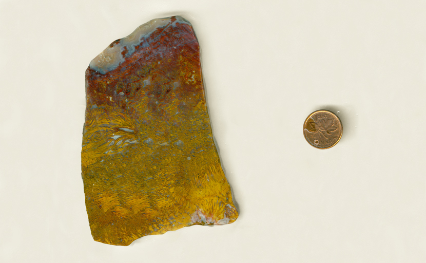 A slab of Mexican Bird of Paradise Agate with bright yellow grass patterns, a burgundy patterned middle layer, and a pale top.