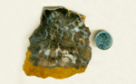 A thick slab of petrified wood, brown and dark gray, with pockets of blue chalcedony and vugs of druzy quartz.