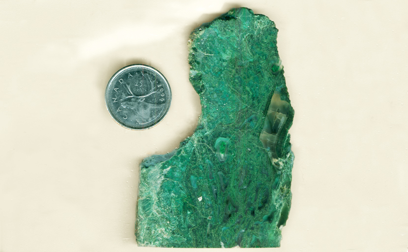 Bright green slab of Chrysocolla-in-Chalcedony from the Inspiration Mine in Arizona, patterned like a thick jungle.