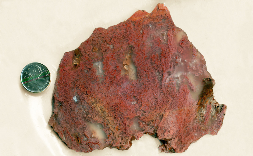 Pink and red moss inclusions in an otherwise clear slab of Pink Moss Agate from Oregon.
