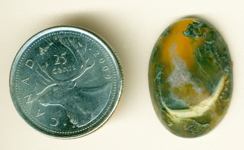 Green and blue moss in a yellow-orange translucent cabochon of Horse Canyon Agate.