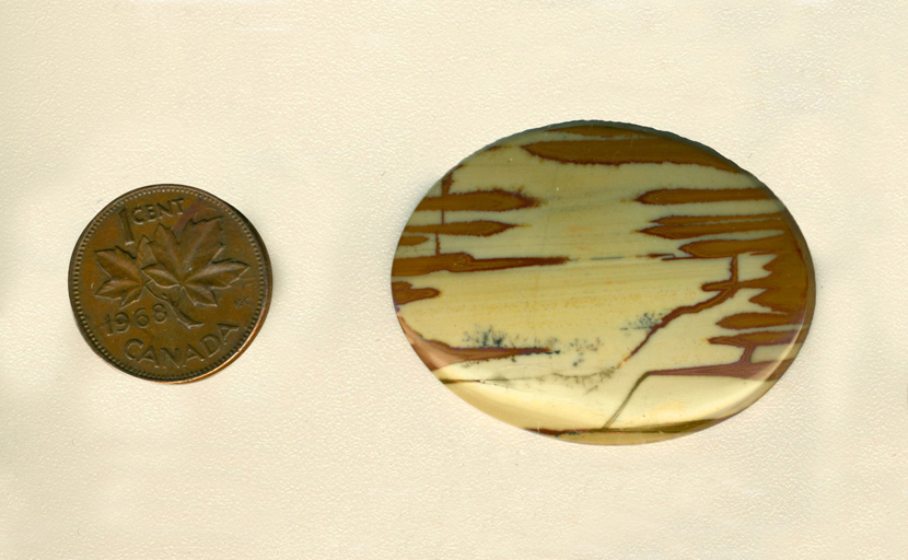 Calibrated polished Owyhee Picture Jasper cabochon from Idaho, with reddish-brown finger patterns extending into a yellow center.