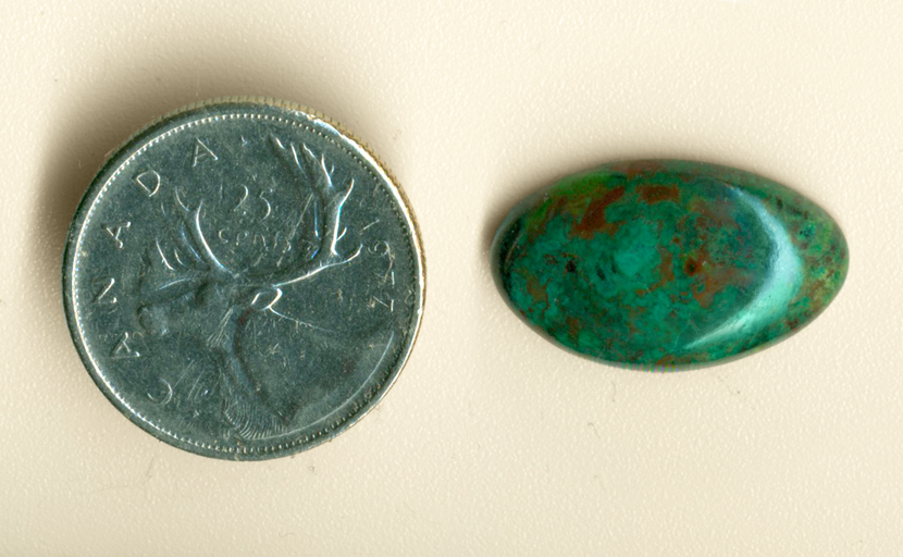 Bright blue-green and contrasting brown spots in a cabochon of Parrotwing Agate from Sinaloa, Mexico.