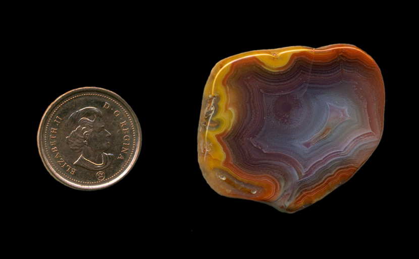 A freeform polished Fortification Agate from Mexico, with a rim of bright yellow around the outer edge, followed by orange, then purple and blue toward the center, all strong and bright.