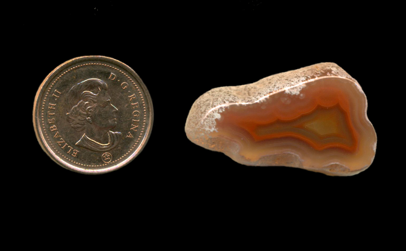 A triangular polished freeform Fortification Agate from Mexico, with and orange fortification pattern in the interior, and a white skin on the outside.