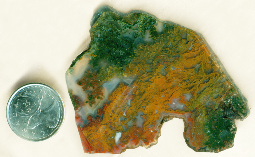 Orange, green, red and yellow moss in a slab of Maury Mountain Moss Agate from Oregon.