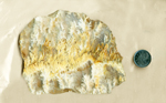 Slab of Stinking Water Plume Agate from Idaho, with white and yellow plumes spreading from a central line.